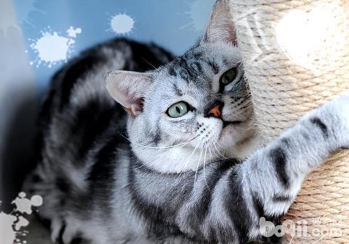 如何治疗猫咪佝偻病-猫咪常见病